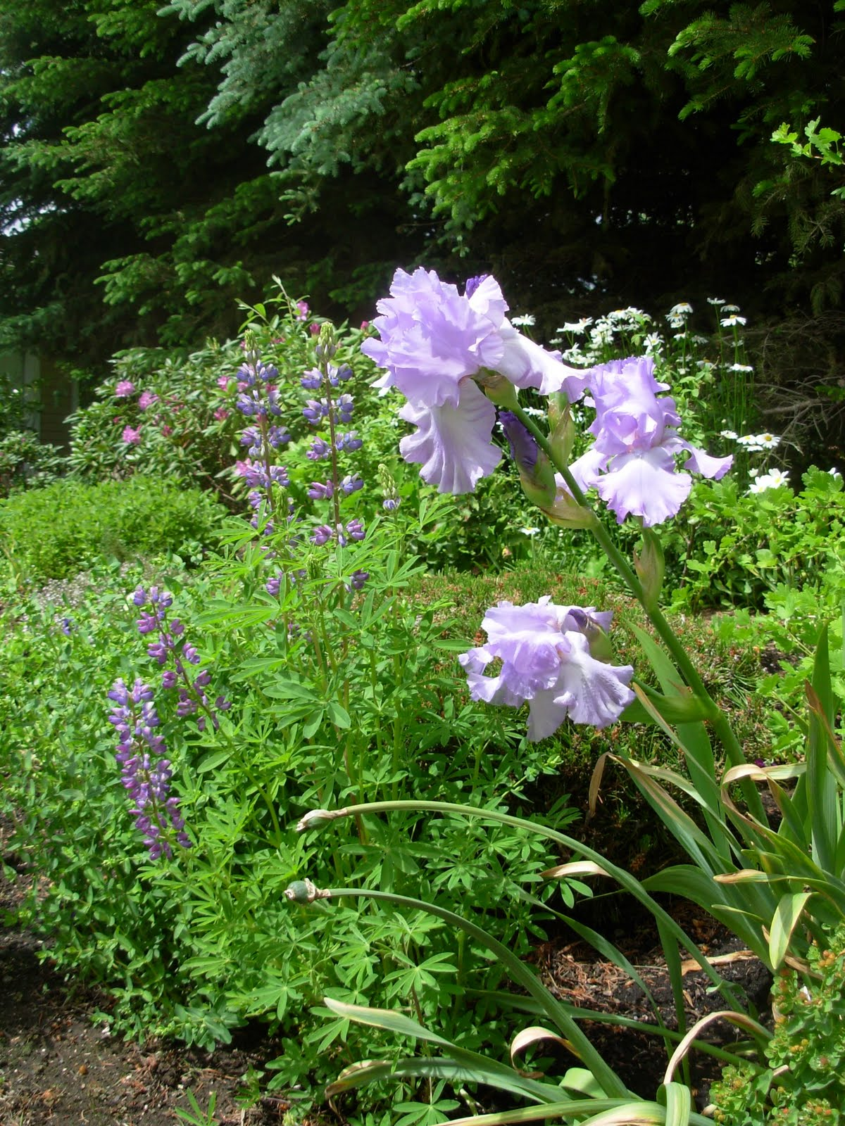 How Do I Take Care Of My Yard? Simple Landscape Maintenance Tips for